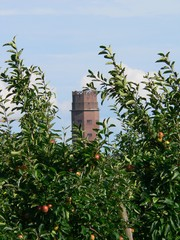 Here you can see two typical elements of the City of Toenisvorst: Appletrees and the water tower built in the 1920s.